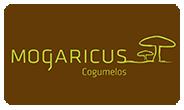 Mogáricus Cogumelos